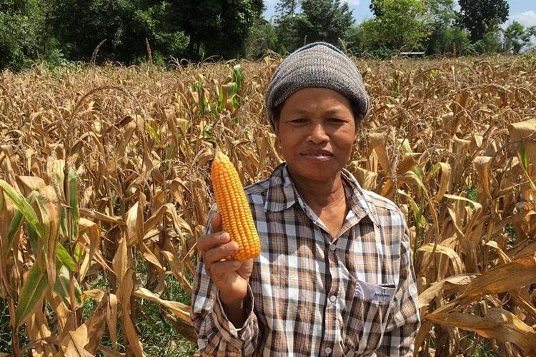 ซีพีเอฟ ร่วมมือกับ กลุ่มธุรกิจการค้าวัตถุดิบอาหารสัตว์ ชวนเกษตรกรปลูกข้าวโพดเป็นมิตรต่อสิ่งแวดล้อม ไม่รุกป่าและปลอดเผา