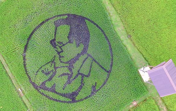 ต่อยอดท่องเที่ยวเชิงเกษตร ม.ราชภัฎอุดรธานี ออกแบบแปลงนาเป็นภาพพระราชกรณียกิจ