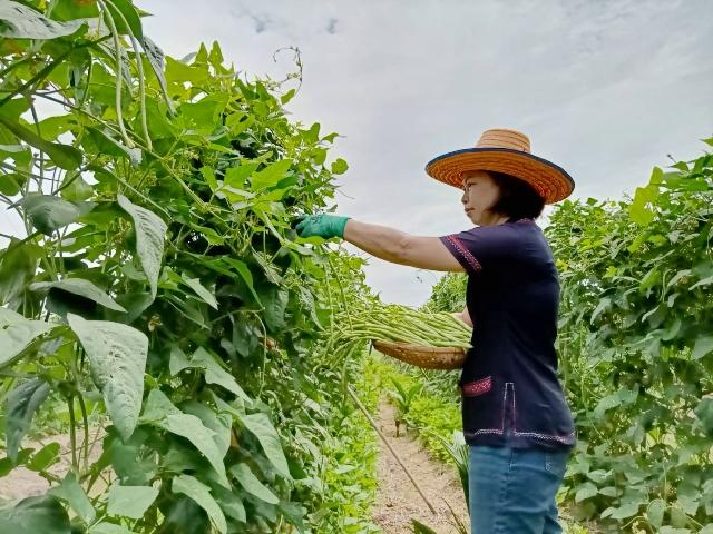 """น่าทึ่ง! สาว อบต.ต่อยอดพืชผลดำเนินสะดวก ติดแบรนด์ """"PIN"""" ฝ่าโควิด-19 ขายทั้งใน-ต่างประเทศ 6 หลักต่อเดือน"""