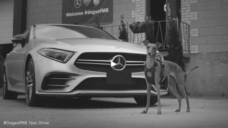 """โฆษณาเมอร์เซเดส เบนซ์ ชุดที่ชื่อว่าน้อนหมาของเมอร์เซเดส เบนซ์ หรือ """"dogsofMB""""  โดยพาบรรดาน้อนหลายสายพันธุ์ (ซึ่งล้วนแต่น่าเอ็นดู ชวนให้ท่านผู้ชมหัวใจละลาย) ขึ้นนั่งชมวิวพร้อมแววตาเปี่ยมสุขตลอดเวลาที่โดยสารอยู่ในการทดลองขับ โฆษณานี้บอกได้เลยว่าการเคลื่อนตัวของเมอร์เซเดส เบนซ์ เป็นไปอย่างนุ่มนวลมั่นคงมากมายราวใด และโฆษณาปิดท้ายด้วยวรรคทอง-ประโยคเด็ดว่า Best friends deserve the best. เพื่อนสุดรักควรได้รับสิ่งที่ดีที่สุด"""