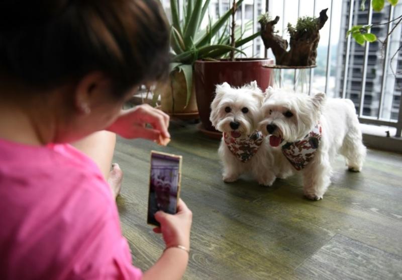 มามี้แคร์รีถ่ายภาพซัสช่าและไปป์เปอร์ พร้อมชูขนมอร่อยล่อใจลูกทั้งสอง ที่บ้านอพาร์ทเมนท์ในสิงคโปร์ เมื่อ 29 สิงหาคม 2021