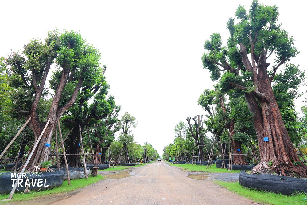 ตลาดต้นไม้ธัญศิริ คลอง 6