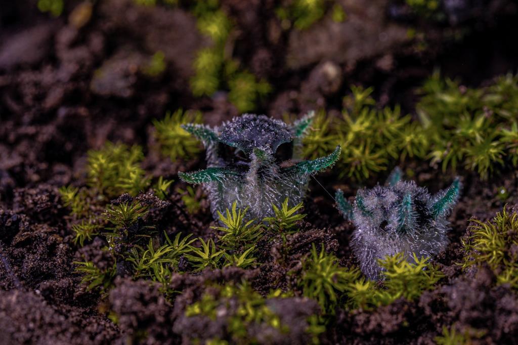 ภาพจากเพจประชาสัมพันธ์ กรมอุทยานแห่งชาติ สัตว์ป่า และพันธุ์พืช โดยนายสุชาติ จันทร์หอมหวล ช่างภาพอิสระ