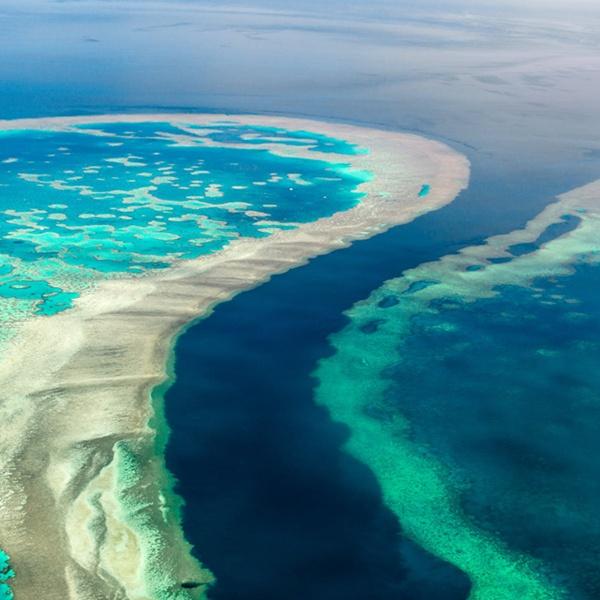 "GCRMN เผย ""โลกสูญเสียแนวปะการัง 14% ในช่วงทศวรรษเดียว"""