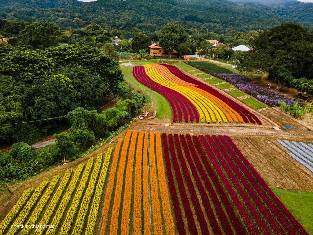 """แลนด์มาร์กใหม่ """"Sixflowers Garden"""" อลังการแปลงดอกไม้หลากสีที่แม่ริม จ.เชียงใหม่"""