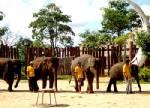 งานแสดงช้างและกาชาดจังหวัดสุรินทร์
