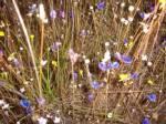 """ตระการตาความงามดอกไม้ป่าหน้าหนาวที่ """"ภูผาเทิบ"""" มุกดาหาร"""