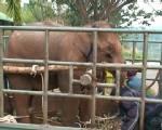 ช้างจากราชบุรีส่งถึงศูนย์อนุรักษ์ฯลำปางแล้ว ต้องก่อไฟแก้หนาวให้