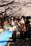 เทศกาลชมดอกซากุระ / วินิจ รังผึ้ง