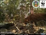 WWF แชร์ภาพดักถ่ายโชว์ความหลากหลายสัตว์ป่าต้านเขื่อนแม่วงก์