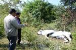 ผู้ว่าฯ ประจวบ เข้าป่าตรวจสอบซากกระทิงที่ตาย 8 ตัว