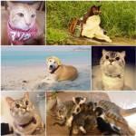 """ยกขบวนก๊วน """"หมา-แมว""""  ขวัญใจหน้าใหม่โลกโซเชียล"""