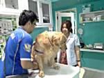"""สัตวแพทย์อ่างทองเตือนคนรักสัตว์ระวังสุนัขเป็น """"โรคลมแดด"""" หลังอากาศร้อนจัด"""