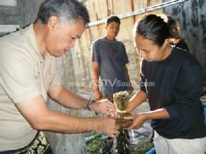 """อุทยานฯ หาดเจ้าไหม เตรียมขยายพันธุ์ """"หอยมือเสือ"""" แบบใหม่ครั้งแรกของไทย"""