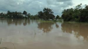บุรีรัมย์ประกาศพื้นที่ภัยพิบัติน้ำท่วมแล้ว 1 อำเภอ นาข้าวจมกว่า 2 พันไร่