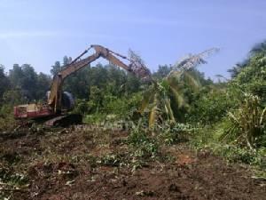ทหารสตูลบุกรื้อพืชไร่ปลูกรุกป่าชายเลนสงวนฯ รวมกว่า 19 ไร่