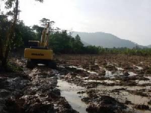 ป่าชายเลนที่พังงาถูกบุกรุกหนัก เตรียมยึดคืนรัฐ 5.5 หมื่นไร่
