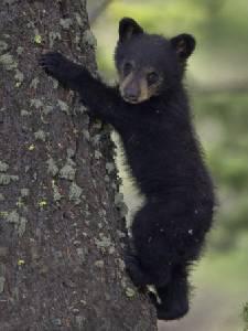 """""""ชาวนิวยอร์ก"""" งง! พบซากลูกหมีกลางสวน """"เซ็นทรัลปาร์ก"""""""