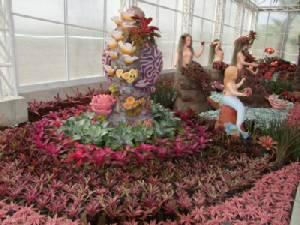 """แห่เที่ยวชมมหัศจรรย์ดอกไม้เปลี่ยนสี """"ไฮเดรนเยีย"""" อุทยานไม้ดอกบุรีรัมย์"""