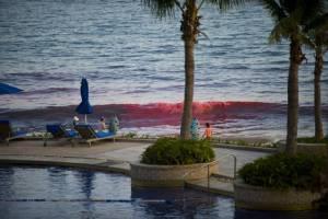 ทะเลเซินเจิ้นเปลี่ยนสี ลูกคลื่นแดงยาวหลายร้อยเมตร