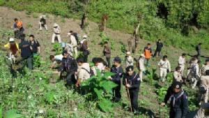 ป.ป.ส.ภาค 5 สนธิกำลังลุยทำลายไร่ฝิ่น ตั้งเป้าให้อมก๋อยเป็นหมู่บ้านสีขาวภายใน 5 ปี(ชมคลิป)