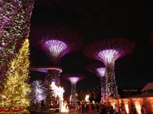 ชมค่ำคืนคริสต์มาสที่ การ์เด้นส์ บาย เดอะ เบย์-ถนนออร์ชาร์ด ช่วงพิเศษเเห่งปีของ สิงคโปร์