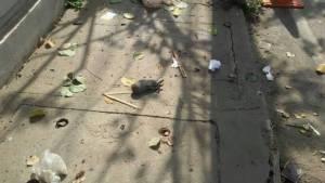 ระทึก! พบระเบิดไซด์บอมบ์วางริมถนนหน้ากงสุลฝรั่งเศสกลางเมืองเชียงใหม่(ชมคลิป)