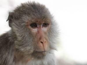 """รู้จัก """"ศูนย์วิจัยไพรเมทแห่งชาติ"""" แหล่งเลี้ยงลิง-วิจัยวัคซีน"""