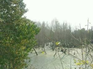 ผอ.ทรัพยากรป่าชายเลนฯ สนธิกำลังตรวจยึดพื้นที่บุกรุกป่าชายเลนปากน้ำประแสร์