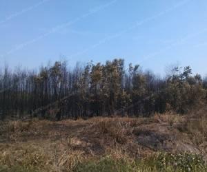 """ไฟไหม้ """"ทุ่งหญ้าป่าเสม็ด"""" สนามบินกองทัพอากาศสตูลสงบแล้ว สั่งทหารเฝ้า 24 ชม."""