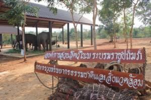องค์การสวนสัตว์เตรียมเปิดโครงการคชอาณาจักร นำช้างคืนบ้านเกิด