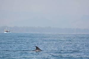 """""""วาฬบรูด้า"""" โผล่หน้าเกาะทะลุ อำเภอบางสะพานน้อย (ชมคลิป)"""