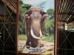 ฮือฮา ขุดซากช้างพลายสังข์ศรีสุขที่กระบี่ พบอาหารในกระเพาะยังสดหลังถูกฝังมากว่า 3 ปี