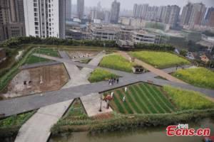 ชม 'สวนครัวลอยฟ้า' บนหลังคาชีวิตของโรงงานอุตสาหกรรมจีน