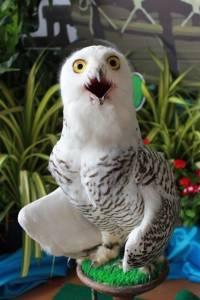 """ชวนเพลิดเพลินกับสัตว์ปีกหลากสายพันธุ์ในงาน """"มหกรรมสัตว์ปีกสวยงามฯ"""" จ.ฉะเชิงเทรา"""