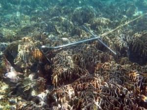 แชร์สนั่นเน็ตธรรมชาติอ่าวมาหยาถูกย่ำยีหลังนักท่องเที่ยวทะลักล้นหาด