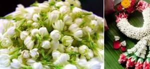 """สรรพคุณหลายหลาก ทั้งราก ดอก ใบ """"มะลิ"""" ดอกไม้รักษาโรค"""