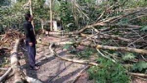 พายุกระหน่ำ 2 ตำบล จ.ตราด สวนผลไม้เสียหายกว่า 30 ล้าน