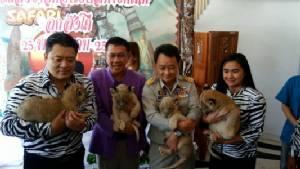 เชียงใหม่ไนท์ซาฟารีเปิดตัว 4 ลูกสิงโตสมาชิกใหม่ที่เกิดจากการผสมข้ามสายพันธุ์