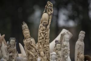 ปักกิ่งทำลายงาช้างเถื่อนมากกว่า 600 กิโลกรัม ท่ามกลางเสียงวิจารณ์จากนักอนุรักษ์ฯ