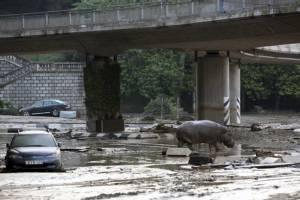 In Pics & Clips : ยอดตายน้ำท่วมจอร์เจียเพิ่มเป็น 14 จำใจยิงทิ้งสัตว์หลุดเพ่นพ่านกลางเมือง