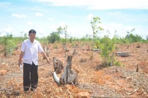 """""""เสี่ยไร่ยูคา"""" โวยโดนมือดีลักตัดต้นยูคาลิปตัสกว่า 200 ไร่จนเหี้ยน เสียหายร่วม 6 ล้านบาท"""