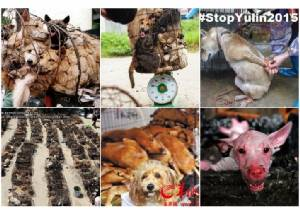 โลกวอนชาวจีนหยุดเทศกาลกินเนื้อหมา ผ่านแฮชแท็ก #Stopyulin2015