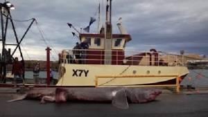 ฉลามพันธุ์หายากตัวใหญ่ยักษ์ ถูกชาวประมงจับได้นอกชายฝั่งออสเตรเลีย