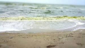 สถาบันวิทยาศาสตร์ทางทะเลสรุปปลาตาย น้ำทะเลเขียวเกิดจากปรากฏการณ์น้ำทะเลเปลี่ยนสี