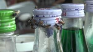 อุทัยฯ แล้งจัด! ผึ้ง-มิ้มยังกระทบ ยกฝูงหาน้ำหวานร้านกาแฟ-น้ำปั่นจนต้องปิดร้านหนี