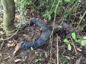พบศพชายนิรนามในป่าข้างสนามกีฬา ต.ราไวย์ จ.ภูเก็ต คาดตายมาแล้ว 7 วัน