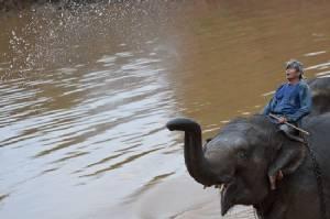 Thai man arrested for electrocuting three elephants