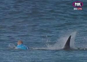"""(คลิป) นาทีชีวิต """"แชมป์โต้คลื่น"""" หวิดโดนฉลามหม่ำ"""