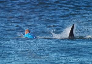 Surf pro fights off S.Africa shark attack in shock TV footage